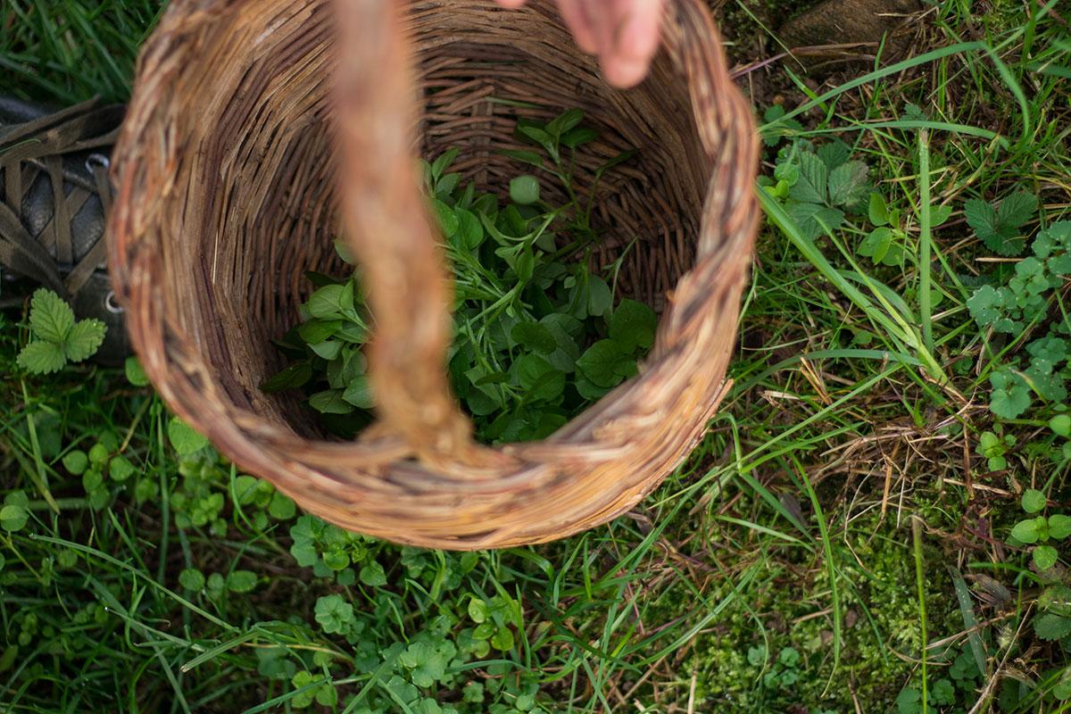 erbe selvatiche salute