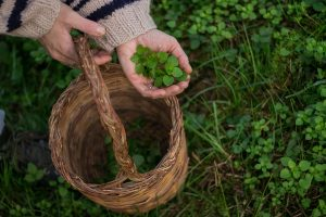 piante spontanee verdura primavera