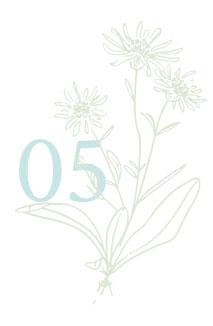 erbe fiori